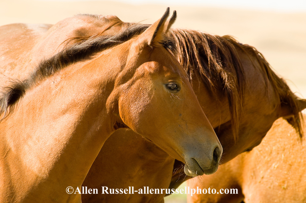 Sorrel Quarter Horse mare and foal