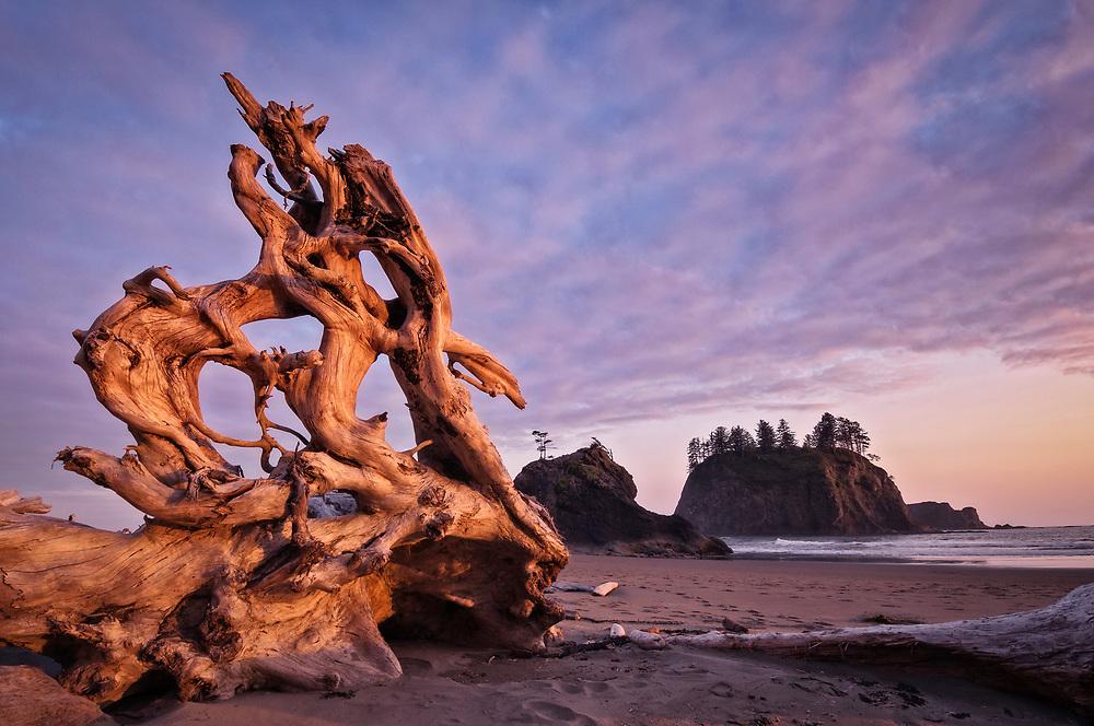 Driftwood on Second Beach, Olympic National Park, Washington.