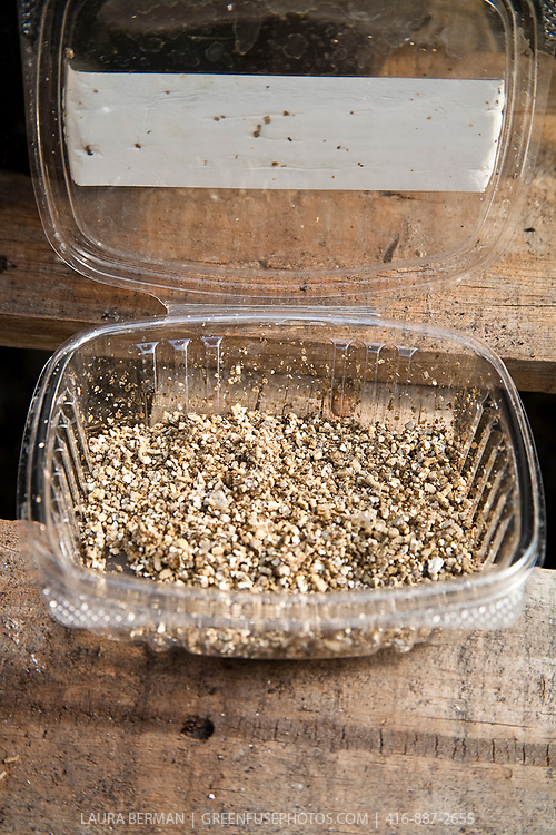 Beneficial insects: The predator Aphid Eliminator ( Aphidoletes aphidimyza)