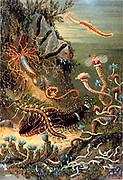 Borstenwurmer des Meeres. A variety of marine worms. In: 'Das Meer' by Matthias Jacob Schleiden, 1804-1881. 1888.