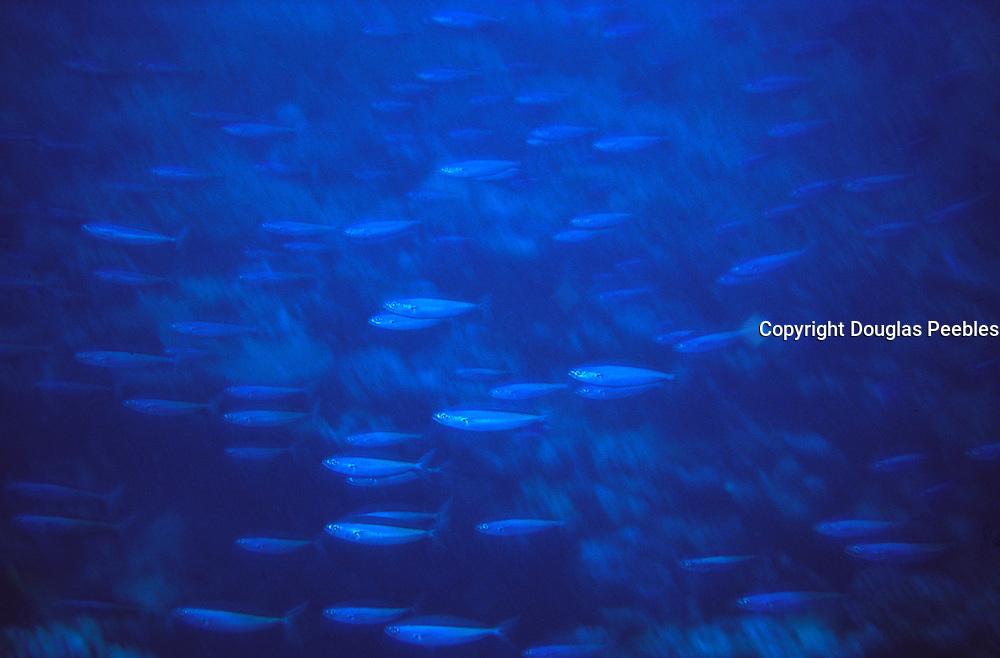 Fish, Underwater<br />