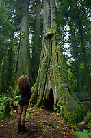 Woman standing beside a tall ancient Douglas fir tree in Cathedral grove forest of MacMillan Provincial Park, Vancouver Island, British Columbia, Canada