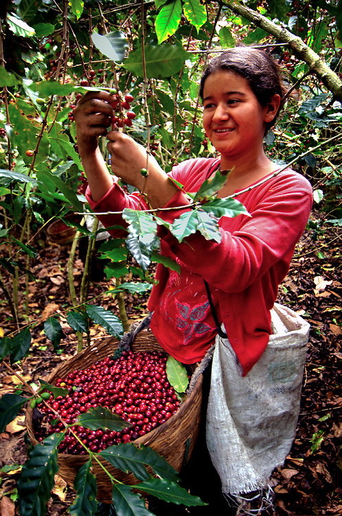 Finca Malacara, Coffee Farm, El Salvador