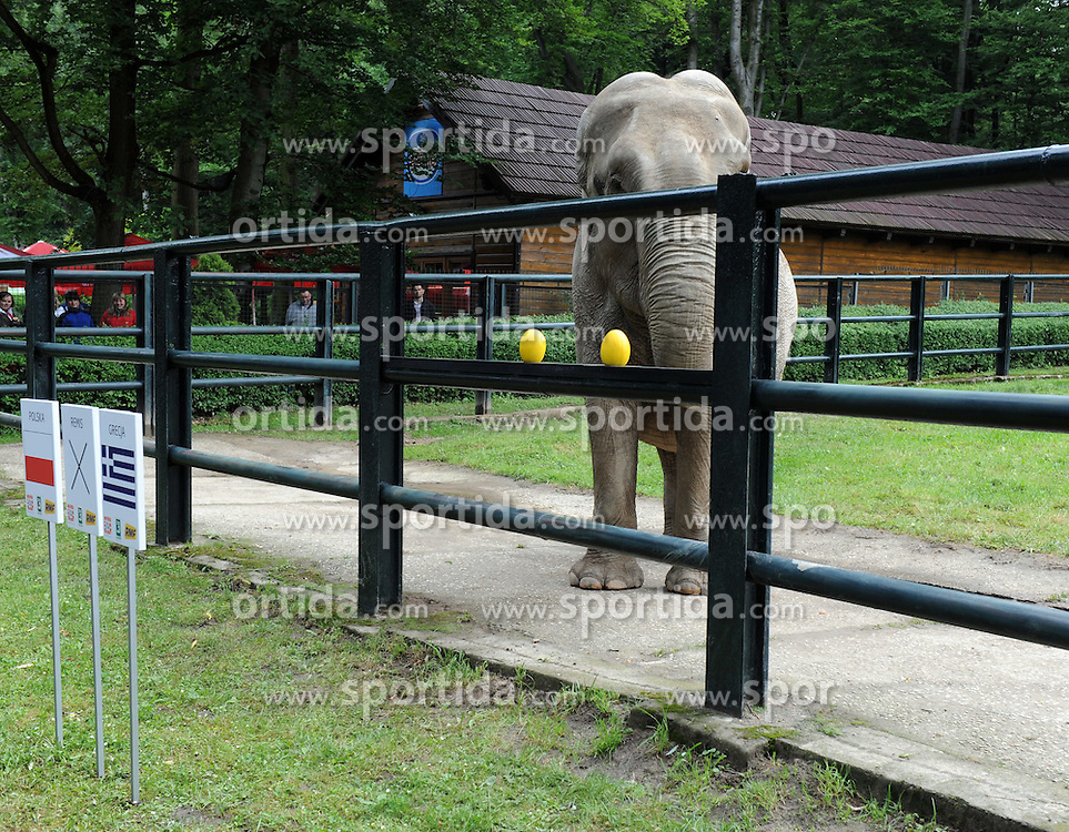 "06.06.2012, Zoo, Krakau, POL, UEFA EURO 2012, Tierorakel, im Bild die 33-jährige Elefantendame ?Citta? tippt beim Eroeffnungsspiel Polen vs Griechenland auf einen Sieg von Polen // the animal oracle of Poland, the 33-year-old female elephant, ""Citta"" tips the opening match Poland vs Greece on a victory of Poland, at the Zoo, Krakau, Poland on 2012/06/06. EXPA Pictures © 2012, PhotoCredit: EXPA/ Newspix/ ATTENTION - for AUT, SLO, CRO, SRB, SUI and SWE only *****"