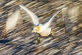 Bird Island - Lamberts Bay