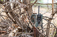 Camera Trap for law enforcment support, Madikwe Game Reserve, North West Provonce, South Africa