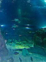 Guam's Underwater World Aquarium, the longest tunnel aquarium in the world.