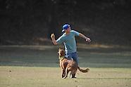 dog play-vredenburgh