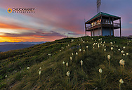 Beargrass at Werner Peak Fire Lookout Tower on the  Stillwater State Forest, Montana, USA