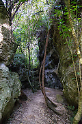Exploring the surreal jungle and eroded limestone crevasses of The Grove Scenic Reserve, New Zealand
