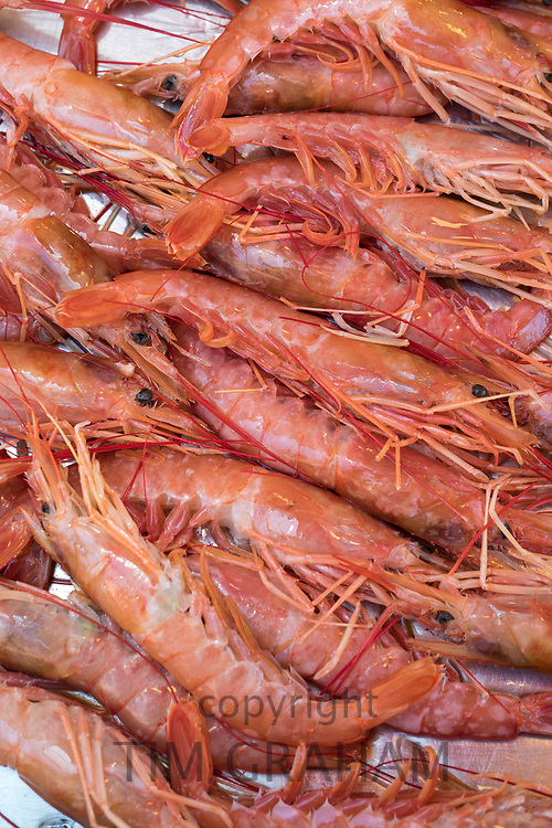 Scampi - gamberone - seafood on display for sale on market stall at old street market - Mercado -  in Ortigia, Syracuse, Sicily