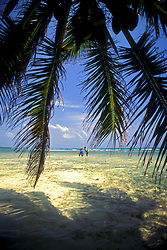 Two people fly-fishing in tropical waters viewed through palm fronds at Blackbird Caye, Belize.