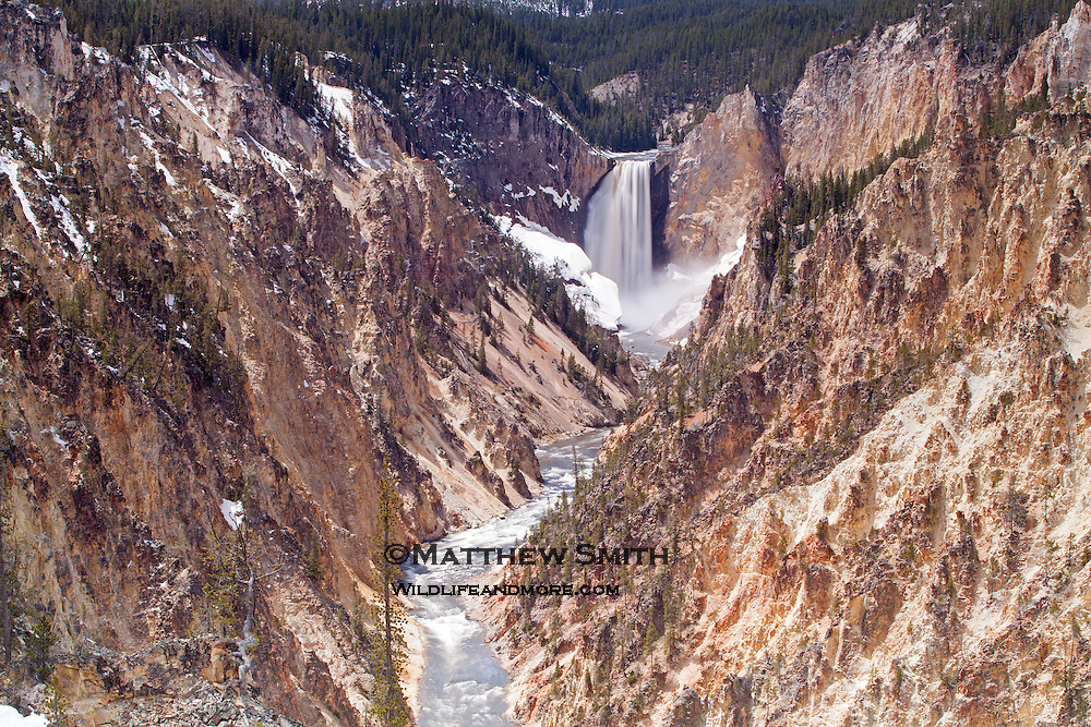 Lower Falls in Yellowstone National Park