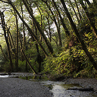 A senior couple hikes out of Fern Canyon, a canyon in the Prairie Creek Redwoods State Park in Humboldt County, California, USA. It was one of the shooting locations of the movie Jurassic Park 2: The Lost World.