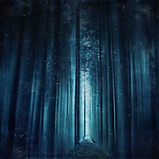 Abstract eerie forest scenery in deep blue tones<br />