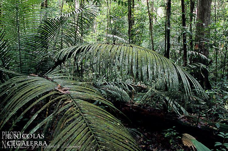Forêt tropicale de Guyane Française