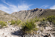 McKittrick Canyon Trail. Hike some of the most scenic trails in Texas in Guadalupe Mountains National Park, in the Chihuahuan Desert, near El Paso, USA. The park contains Guadalupe Peak, the highest point in Texas (8749 feet/2667 m). The Guadalupe Mountains are the uplifted part of the ancient Capitan Reef which thrived along the edge of an inland sea more than 250 million years ago during Permian time. Capitan Reef is one of the best-preserved exposed Permian-age fossil reefs in the world. The park also features the landmark peak of El Capitan, along the historic Butterfield Overland Mail stagecoach line (1857-1861), which carried passengers and US Mail in just 22 days to San Francisco starting from Memphis, Tennessee or St. Louis, Missouri, twice a week. Hiking the ecologically-diverse McKittrick Canyon in Guadalupe Mountains NP is best when fall foliage turns color.