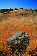Rock in a field, Monte Bello Open Space Preserve, Palo Alto, California