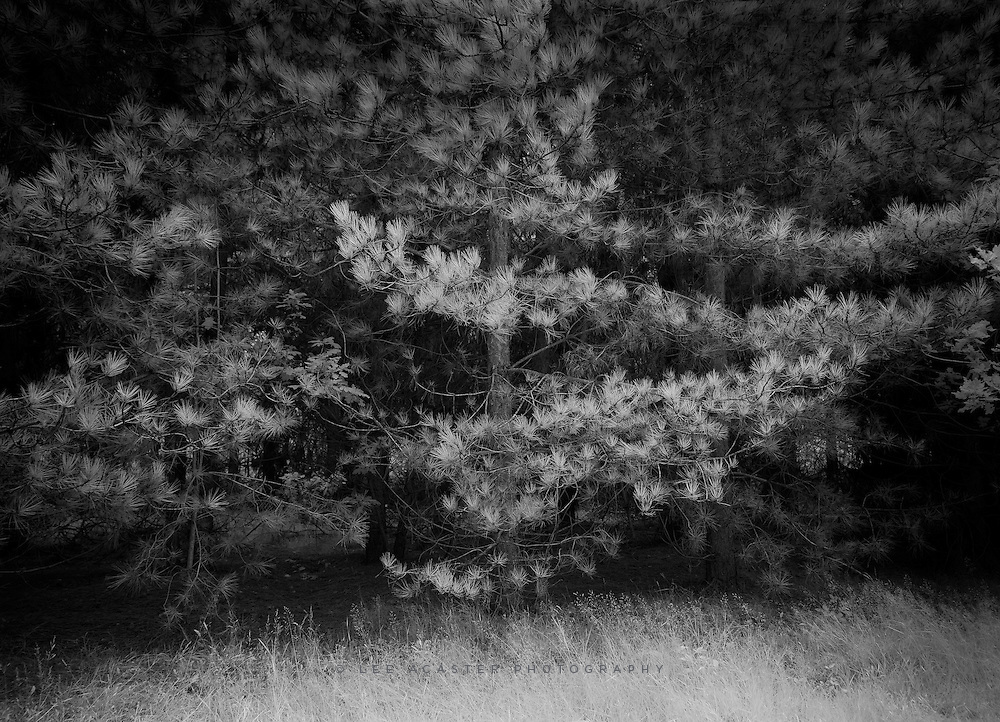 Yet more Infrared Dunwich Forest