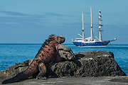 Marine Iguana (Amblyrhynchus cristatus) & SS Mary Anne<br /> Black Beach, Floreana Island<br /> Galapagos<br /> Ecuador, South America<br /> ENDEMIC TO THE ISLANDS<br /> Breeding colors, December