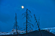 Moon rising and trees at Medicine Lake<br />