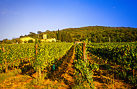 Vineyards around Panzano (Chianti), Tuscany, Italy