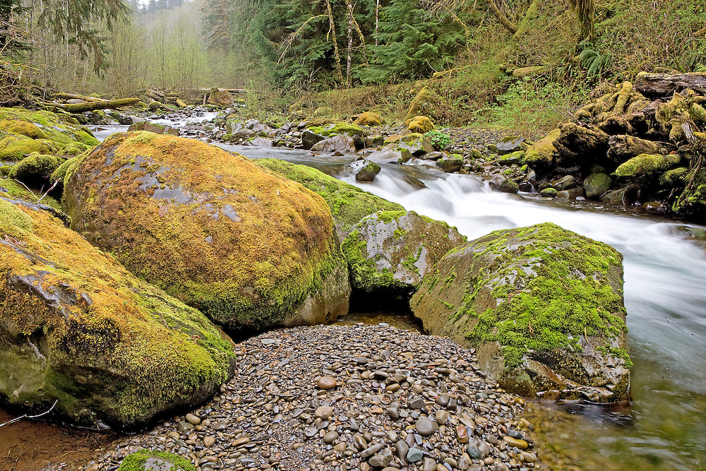 early sping on Owl Creek Hoh Rainforest