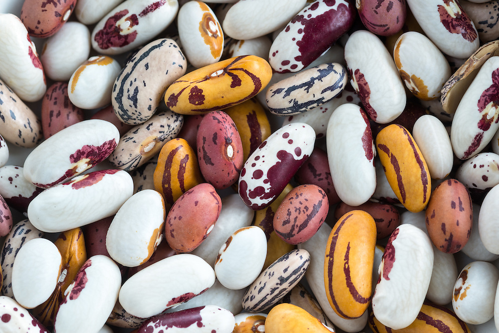 Variety of dried heirloom beans.