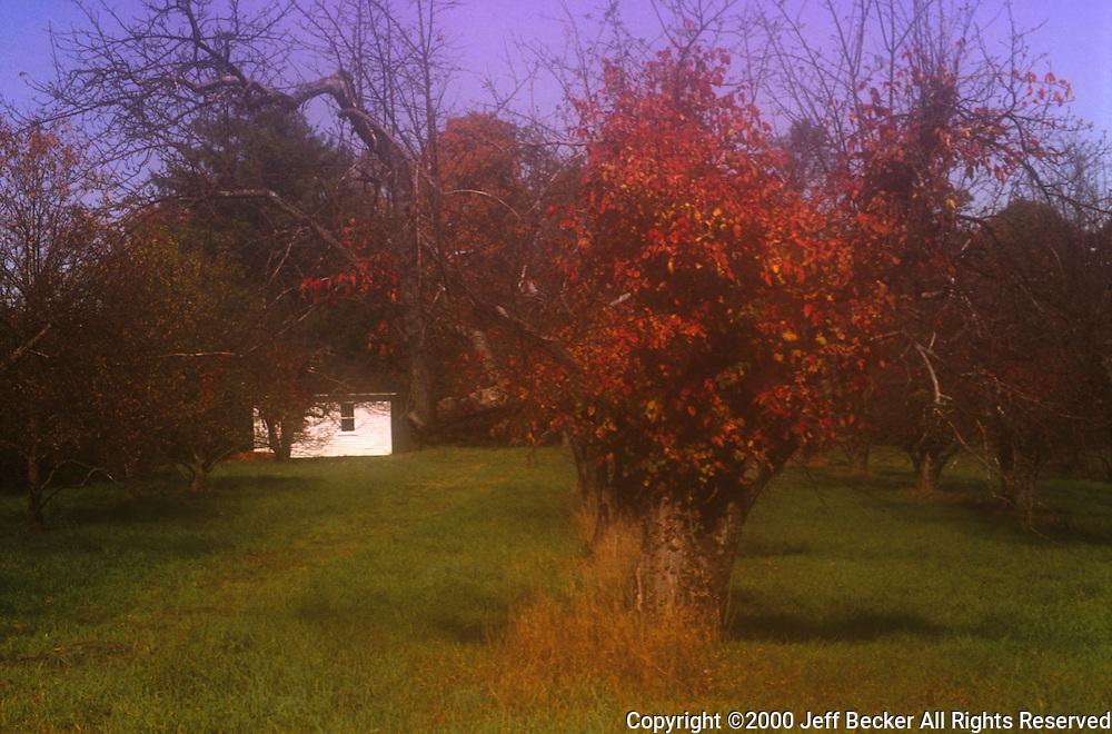 Moonlight Slady's Garage<br /> &copy;2000 Jeff Becker <br /> All Rights Reserved<br /> 5 Cedar Hill Road<br /> Easton, CT 06612<br /> 203.261.9765<br /> 203.526.4059