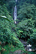 Trafalgar Falls, a hot and cold waterfall, this being the hot side, Commonwealth of Dominica ( Eastern Caribbean )