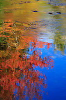 Fall reflection in the Ammonoosuc River in the White Mountains, NH.