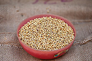 Coriander seeds on sale at Khari Baoli spice and dried foods market, Old Delhi, India