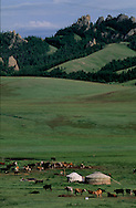 Mongolia. yurts camp in   Tereelg valley