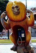 The Golden Lion Tamarin is the most popular one of the four Lion Tamarin species. This monkey roofing a phone booth guarantees discretion. | Das Goldgelbe Löwenäffchen ist die populärste der insgesamt vier Löwenäffchen-Arten. Dieser Affe, der eine Telephon-Zelle überdacht, garantiert seine Verschwiegenheit.