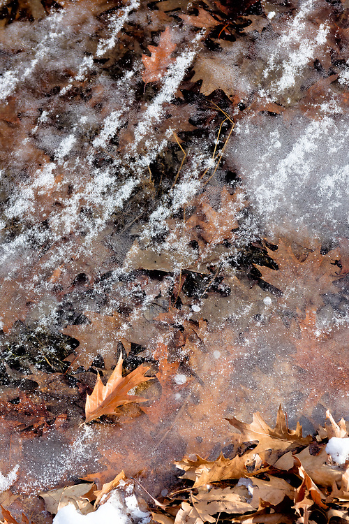 With very low temperatures for a few days and steady wind driving the cold ever more into frigid Zero Land, I put on the warmest clothes and went to photograph details along the lake edge at the local park. The new crystal clear ice let me see all the oak leaves entombed below the surface in detail, evidence of a quick hard freeze that went down to the bottom here in the shallows at the lake edge. There was snow in sweeping parallel bands across the frozen surface that didn&rsquo;t move. Like everything else, it was cold-petrified into place.<br /> <br /> The only leaves above the surface are along the bottom of the image and one laying stuck on top by itself. Everything else is down underneath the freeze line, waiting for the Spring thaw. I returned here the following day to find the ice unclear and varied in opacity, sometimes to near white. Snow laid randomly in large areas, not in striated lines as before. Everything had changed as Mother Nature had shifted once again.