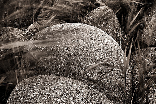 Large, two foot wide, perfectly rounded and amazingly smooth, extremely heavyweight granite boulders in this faraway cove are gently and regularly caressed by the softest grasses growing from between the sensual curves. At the back of the beach the grasses almost completely envelop the boulders and the contrast between hard and soft, organic and inorganic, solid and delicate, static and moveable was richly obvious. I could have spent a whole day at this long boulder cove, immersed in the sensuality of such beautiful forms and contrasts..
