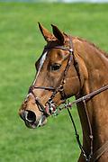 Maria Appelboom - Toscane<br /> Nederlands Kampioenschap Springen 2013<br /> © DigiShots