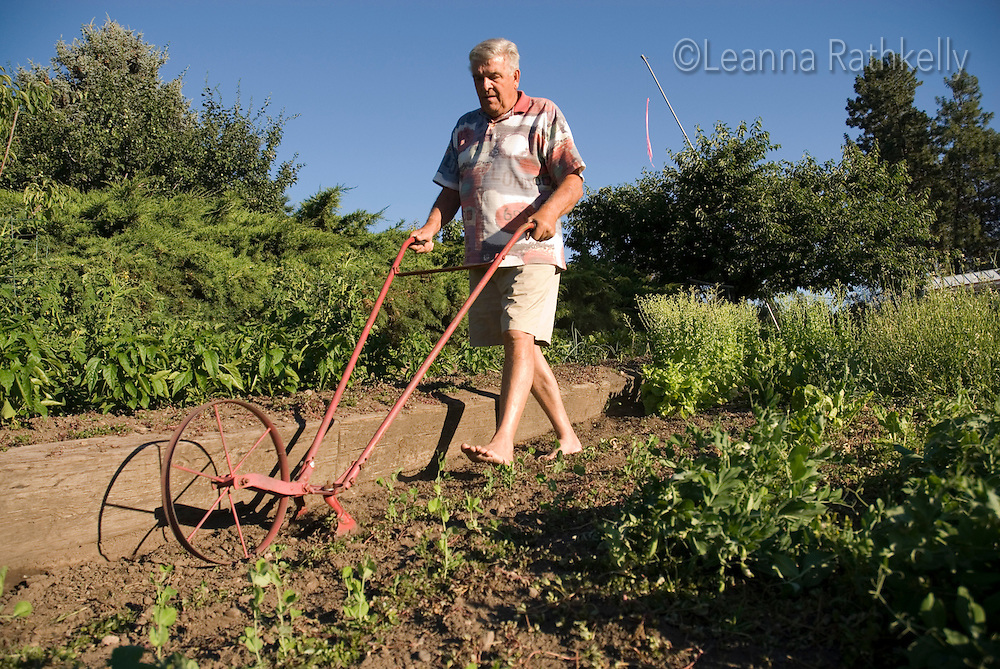 Adult male (65) uses a mechanical plow to till his backyard garden in the Okanagan, BC Canada.