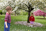 Spring blossoms rain down as Aaron Siegal, 3, and Nina Chosy, 2, play amid flowering crab apple trees at the Longenecker Horticultural Gardens at the University of Wisconsin Arboretum on May 10, 2006.