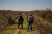 Goran Kostadinovic and Sasa Milosevic survey their farm lands near Jagodina, Serbia. November 2014.