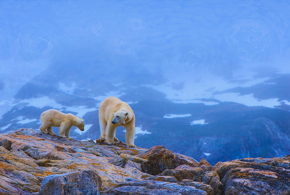 Polar Bear (Ursus Maritimus) and cub hunting on land - Van Gogh Edition