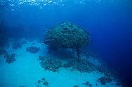 Precontinent II Cousteau, Red Sea, Sudan