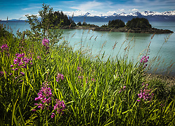 Fireweed (Chamaenerion angustifolium) blooms across from islands in the Lynn Canal. In the background are the mountains of the Chilkat Range. This view is from a pullout on the Glacier Highway, north of Juneau.