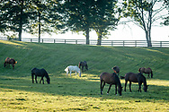 Hamptonburgh, New York - Horses graze in a field at Kaz Hill Farm on Aug. 5, 2017.
