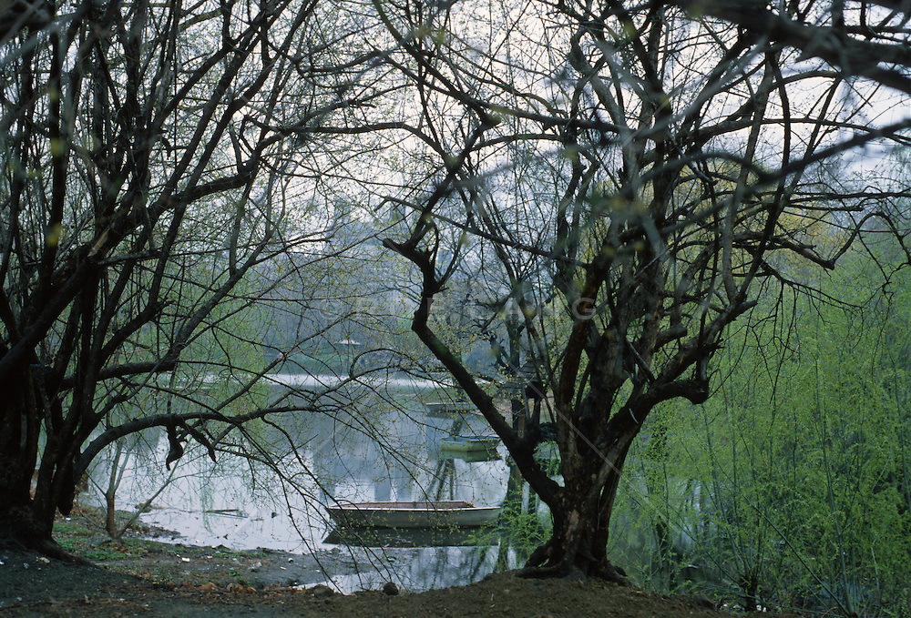 Lake and wild looking branches of trees in Central Park, NY