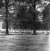 6/11/1967<br /> 11/6/1967<br /> 6 November 1967<br /> <br /> Herd of Deer in Phoenix Park