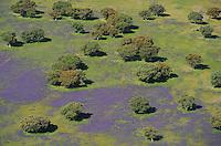 Aerial image<br /> Espiritu Santo area,   dehesa Salamanca Region, Castilla y León, Spain