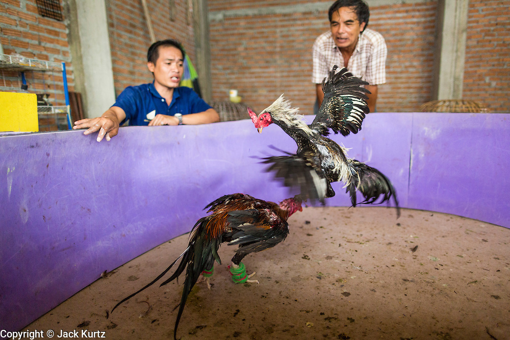 27 AUGUST 2013 - BANGKOK, THAILAND:       Men watch fighting cocks in an impromptu arena they put up in a construction site they're working at during their lunch hour. This was a practice match to test the birds' mettle. Their spurs were wrapped and beaks muzzled so they wouldn't seriously injured. Cockfighting is legal in Thailand but is not seen very often in Bangkok. It's very popular in the provinces and rural areas, especially north of Bangkok.   PHOTO BY JACK KURTZ