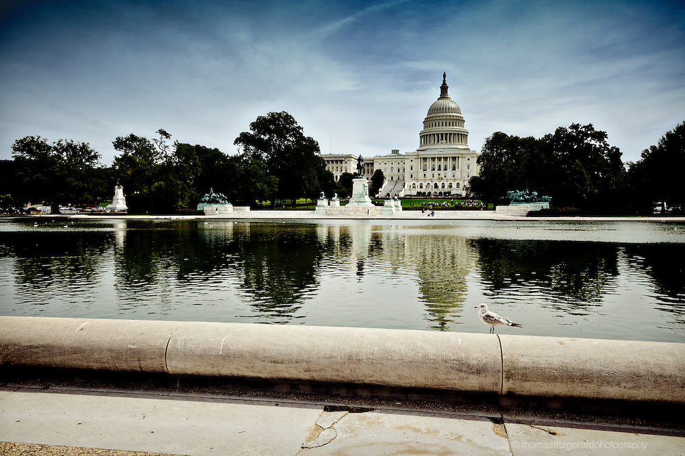 A Seagull sits on the edge of the reflecting pool with the US Capitol Building in the background
