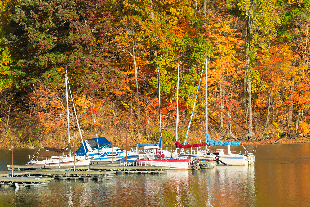 Early morning sun lights up the shoreline of the Clear Fork reservoir and marina during peak autumn color.
